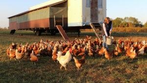 Hühner vor dem mobilen Stall