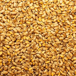 Unsere Bio-Produkte: Weizen natürlich Hof Schwienhorst