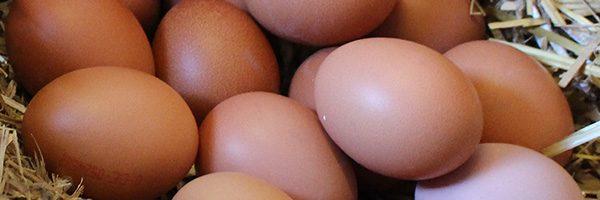 Unsere Bio-Produkte: Eier natürlich Hof Schwienhorst