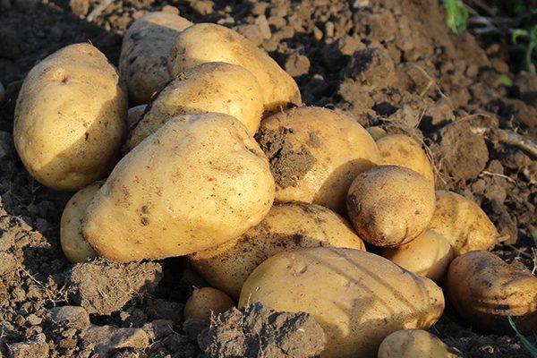 Unsere Bio-Produkte: Gemüse natürlich Hof Schwienhorst